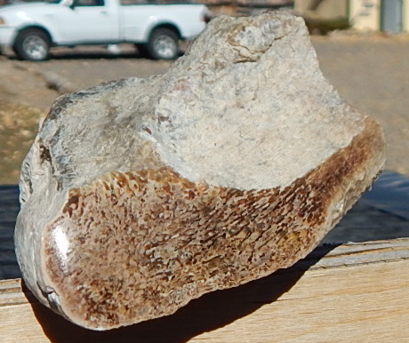 wyoming dinosaur bone