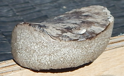 wyoming dinosaur bone specimen