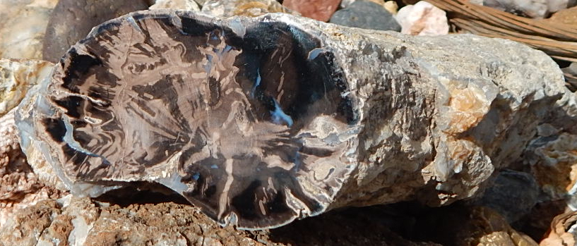 blue forest petrified wood wyoming