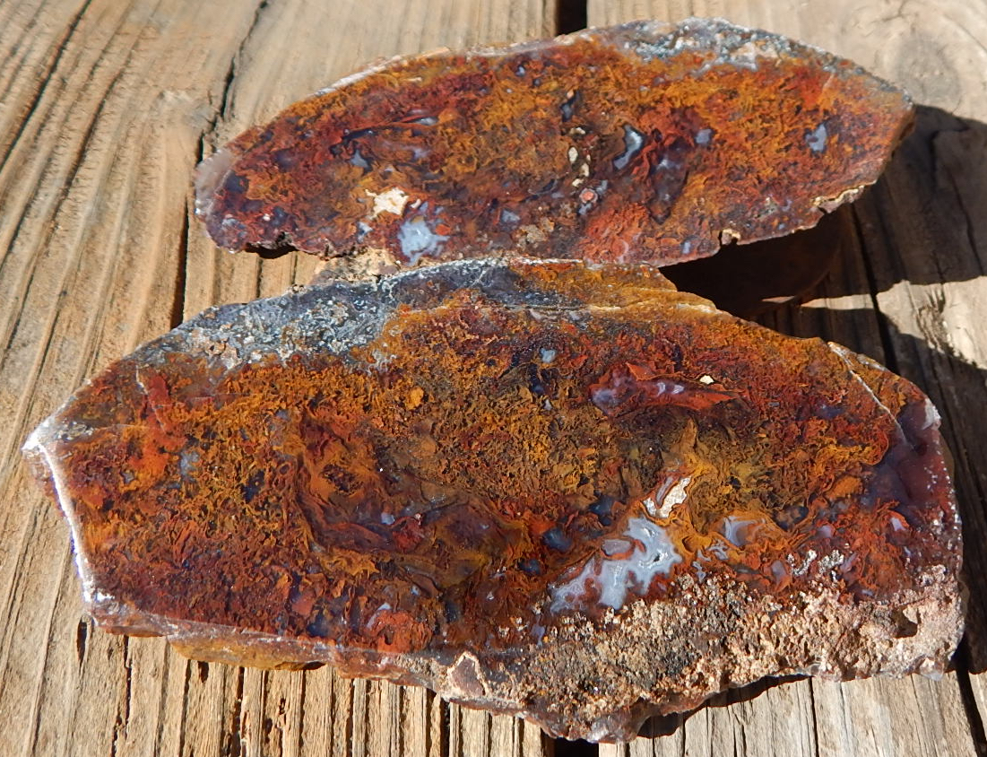 Utah Petrified Wood Specimens